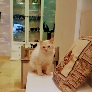 CatCafe2-2